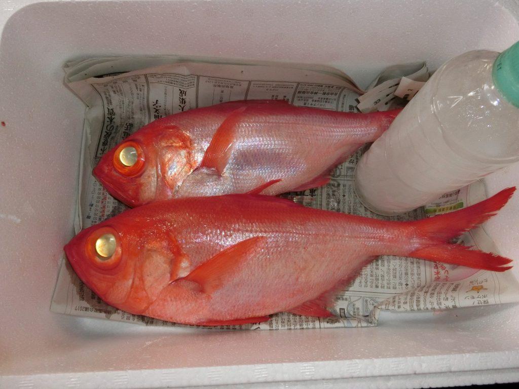 腕に覚えある釣り好きの某住職様にいただきましたがその晩に食しました。ご馳走様でした。